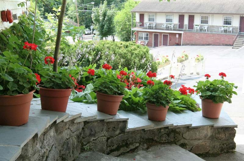 Red flower in pots on stairs